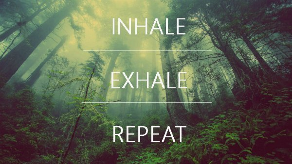 The Importance of Breath in Yoga – Embody Wellness Blog